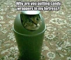 Talking Cat Meme - trash talking cat