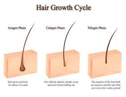 growing out pubic hair benoté blog