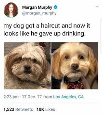 My New Haircut Meme - dopl3r com memes morgan murphy morgan murphy my dog got a