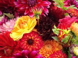 All Types Of Flowers List - 100 types of flowers list 100 winter flowers list sweet
