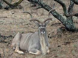 Texas Wildlife Tours images Day trips exotic wildlife tours mountain home excursions to the jpg