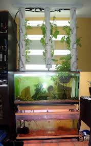 how to raise salmon in a tank salmon raising and aquaponics