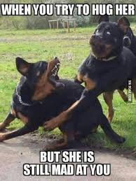Funny Couples Memes - every damn arguing couple i met pinteres