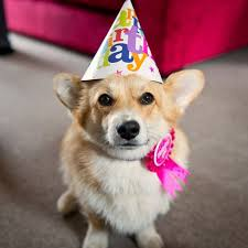 Corgi Birthday Meme - i thought i d spread some of the happiness my friends and family