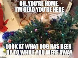 Cat Christmas Tree Meme - christmas tree imgflip