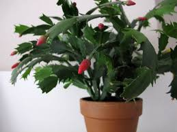 hardest plant to grow easy houseplants that are hard to kill