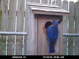 audubon bird cam birds of prey