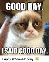 Happy Day Memes - 25 best memes about good day i said good day good day i said