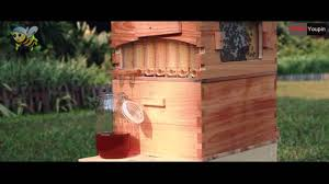 automatic flow hive honey collection beehive youtube