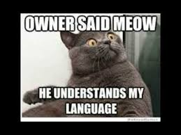 Funny Meme Pictures 2014 - funny cat memes 2014 animal memes youtube