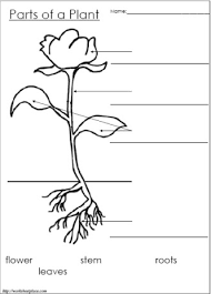 10 best images of labeling plant parts kindergarten label plant