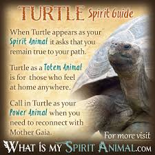 turtle symbolism u0026 meaning spirit totem u0026 power animal