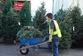 christmas tree sales u2013 the club for boys