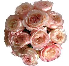 wholesale roses buy wholesale roses online in bulk for wedding stem roses