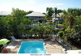 Backyard Bbw Residential Pool Palm Trees Stock Photos U0026 Residential Pool Palm