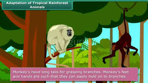 5 Dominant Plants In The Tropical Rainforest Adaptation Of Tropical Rainforest Animals Youtube