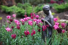 lexus jordan twerk video the graceful gardener my 2013 bulb selections u2026