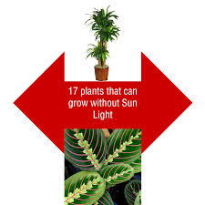 Plants That Dont Need Sunlight by Dear Reader U2013 S N Phadke U2013 Medium