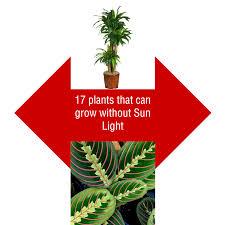 Indoor Plants That Don T Need Sunlight by Dear Reader U2013 S N Phadke U2013 Medium