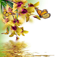 butterflies orchid painting animals butterfly reflection