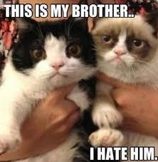 Funny Grumpy Cat Meme - 60 angry cat funny memes for whatsapp