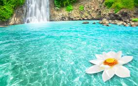 photo collection flower and waterfall wallpaper