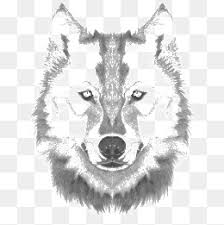 wolf avatar png images vectors and psd files free download on