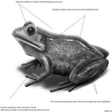 how to draw a frog in 4 steps with photoshop