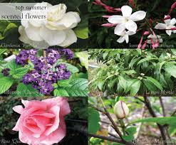 Top Flowering Shrubs - fragrant garden spaces plant care about the garden magazine