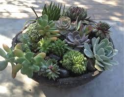 succulent arrangements succulents the simple proof