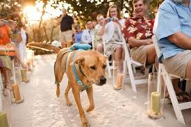 Adorable Dog Friendly Wedding Ideas