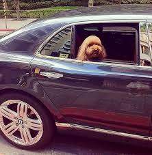 purple bentley mulsanne rich dogs of instagram mirror online