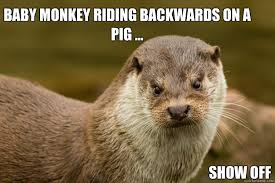 Baby Monkey Meme - baby monkey riding backwards on a pig show off scowling