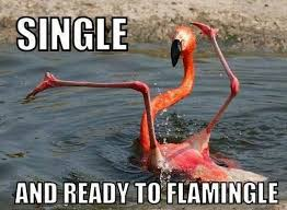 Funny Bird Memes - 20 adorable bird memes that ll tickle your heart sayingimages com