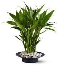Plant Vase 8 Best Water Plant Ideas Images On Pinterest Gardening Water