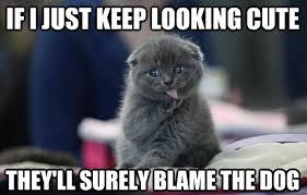Weird Cat Meme - keep looking cute funny cat meme
