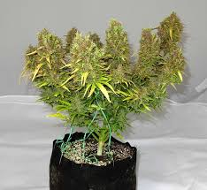 images of plants 10 tips tricks u0026 tactics for great plant pictures grow weed easy