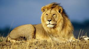 wild animals images Why it is important to save wildlife jpg