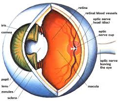 What Causes Eye Blindness Danielle T 4th Hour Blog