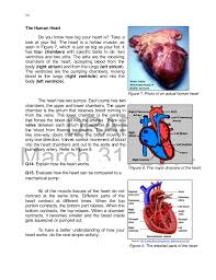 Anatomy Of Human Heart Pdf K To 12 Grade 9 Learner U0027s Material In Science
