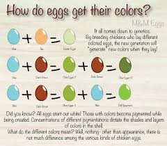 what do different colours mean eggs of all colors m u0026m eggs