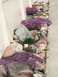 rock garden and creeping flowering thyme so pretty