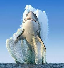 awesome ocean creatures album on imgur