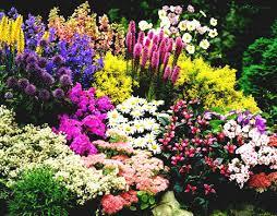 small flower garden ideas gardening for gardens backyard vegetable