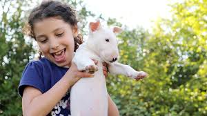 11 best dogs for kids that they u0027ll actually want to help take care of