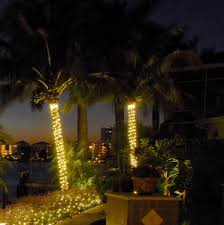 string lighting for your wilmington palm trees add class and