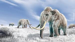 reviving woolly mammoth ancient explorers america shows