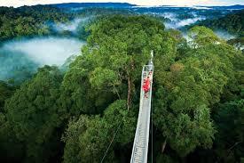 Treetop Canopy Tours by Samara Monteverde Tour Package Costa Rica Info Center
