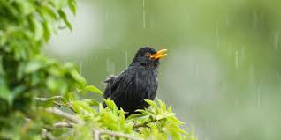 bbc earth how is the weird winter weather affecting our birds