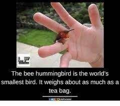 Tea Bag Meme - 25 best memes about tea bag tea bag memes